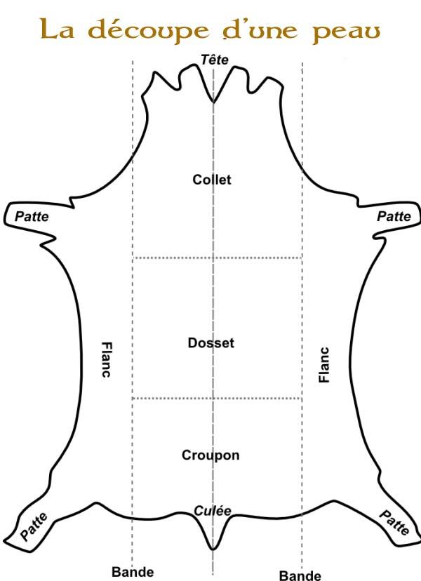 les différentes parties d'une peau